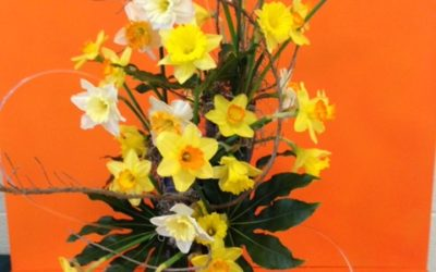 Daffodil Inspirations – Quick Design & Style Pointers from the 2019 Annual Daffodil Show by Guest Blogger RGC Member Gretchen Collins